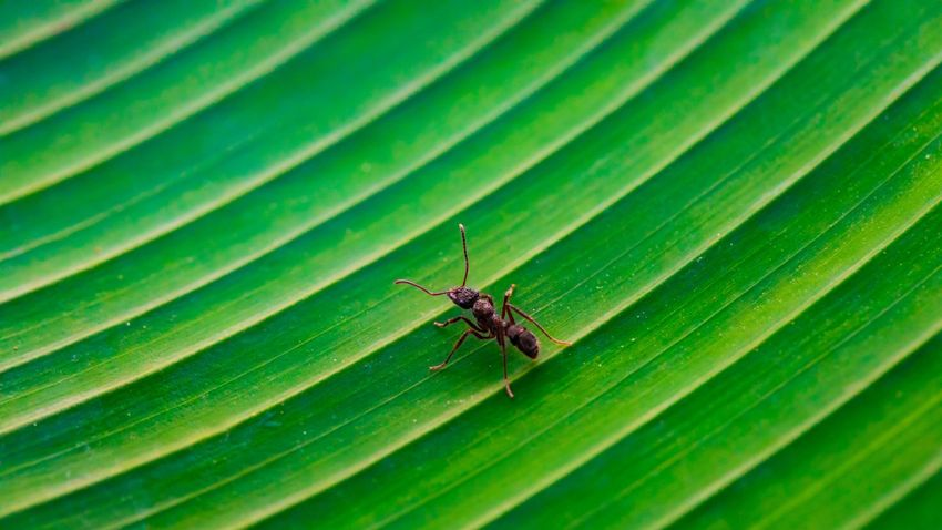Sok állatfaj ösztönösen tart távolságot, ha beteg van köztük