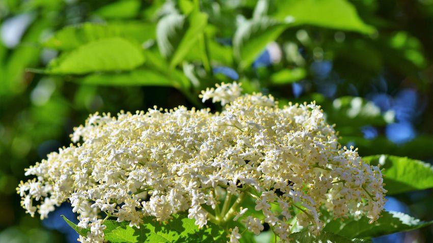 Gyógyító növények, amik felturbózzák az immunrendszerünk