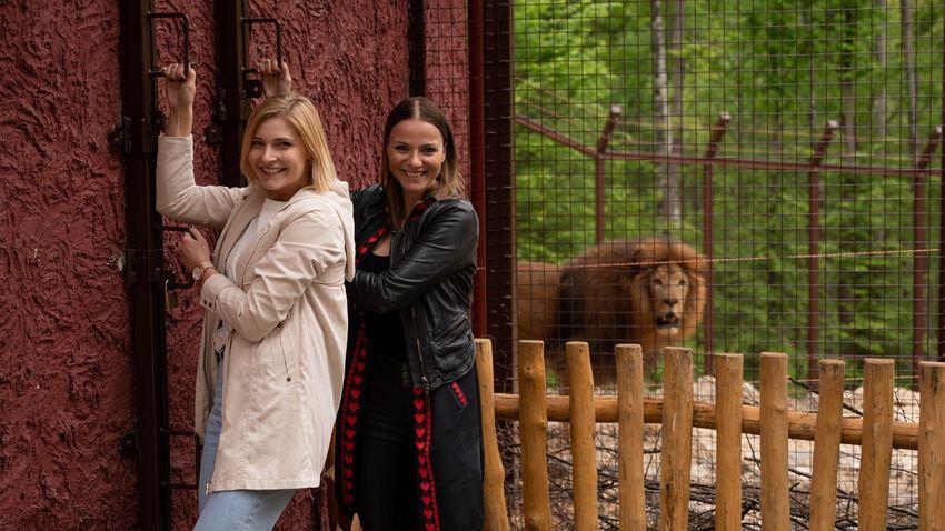 Először mutatták meg magukat a Miskolci Állatkert oroszlánjai