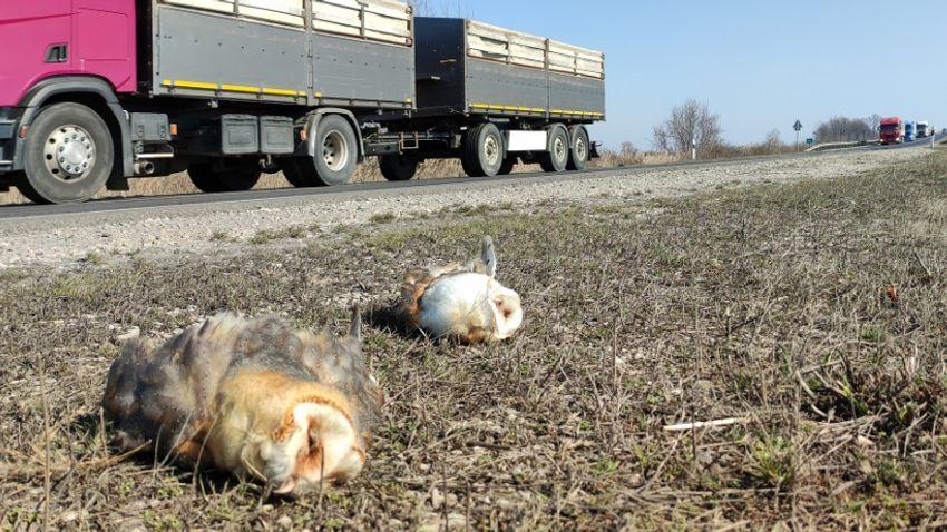 Ételhulladék okozta a tömeges madárpusztulást