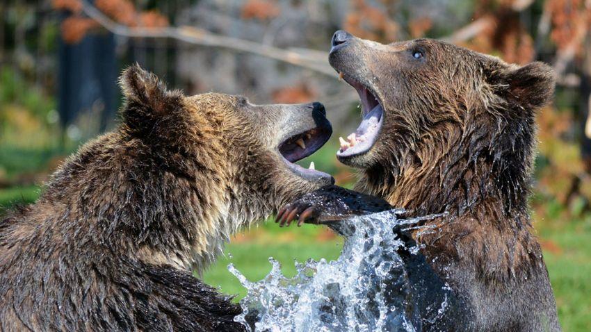 Medvék sebeztek halálra egy dolgozót egy sanghaji vadasparkban