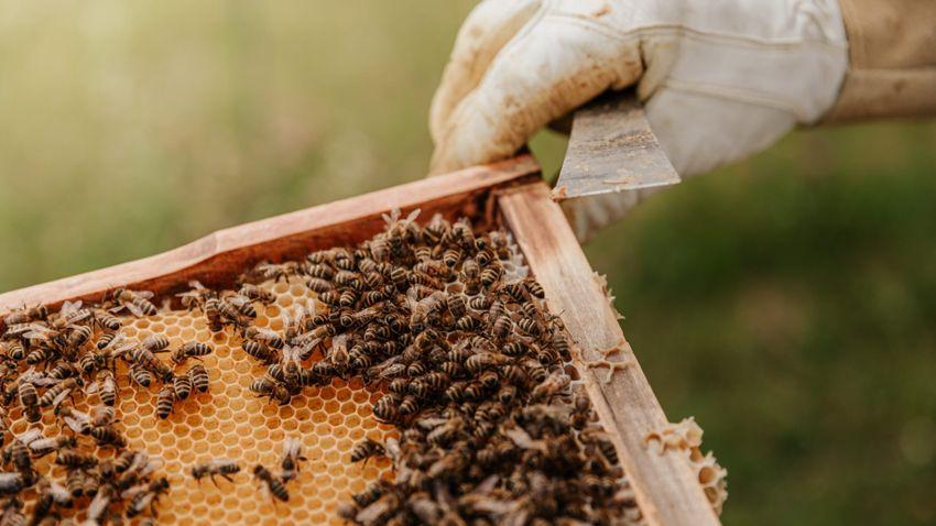A változékony idő komoly gond a méhek és méhészek számára