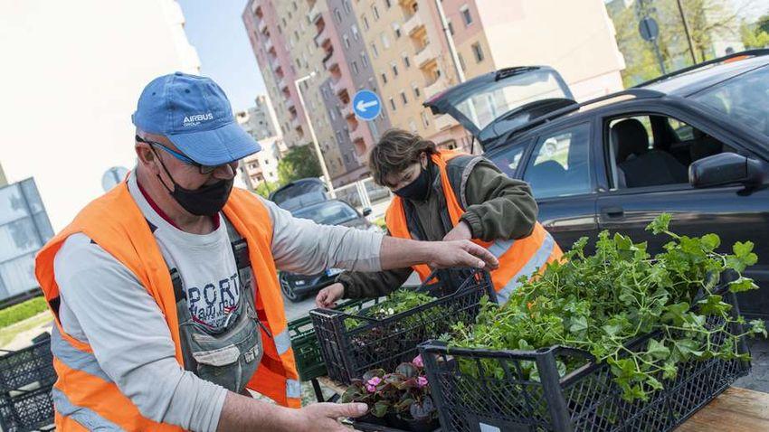 Virágba borul Székesfehérvár – Rekordszámú pályázat érkezett