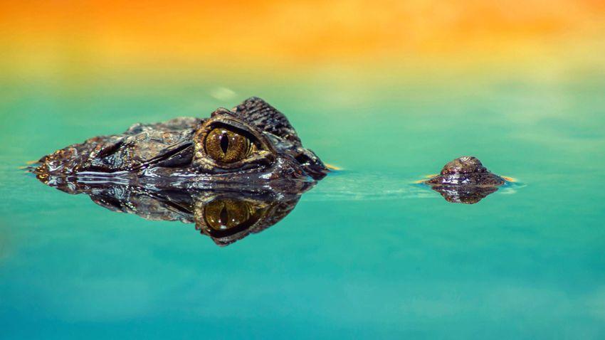 Nem csak szimbolikusan hullatunk krokodilkönnyeket?