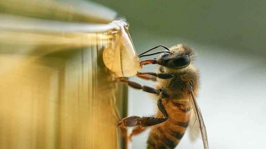 Méhméreg a repcén: ellenőrzik a vegyszerhasználatot Somogyban