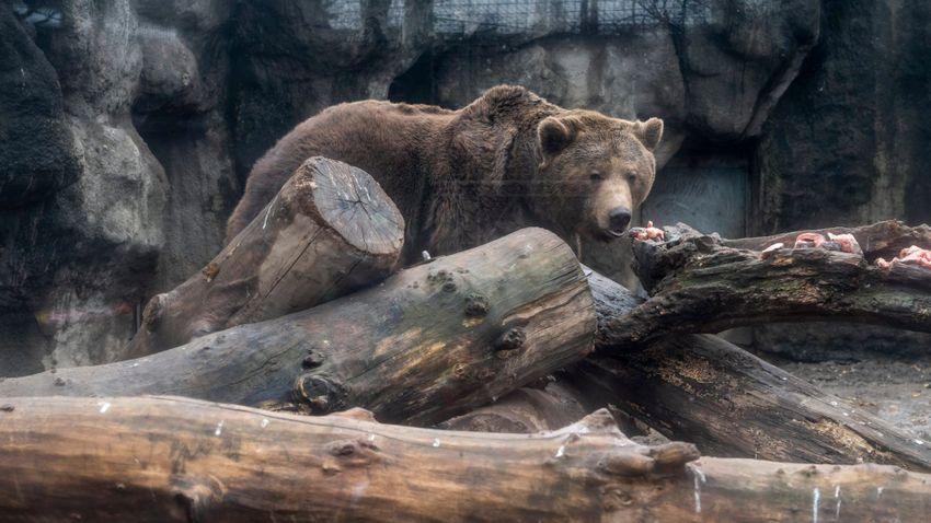Két medve is felbukkant pénteken hajnalban Egerben