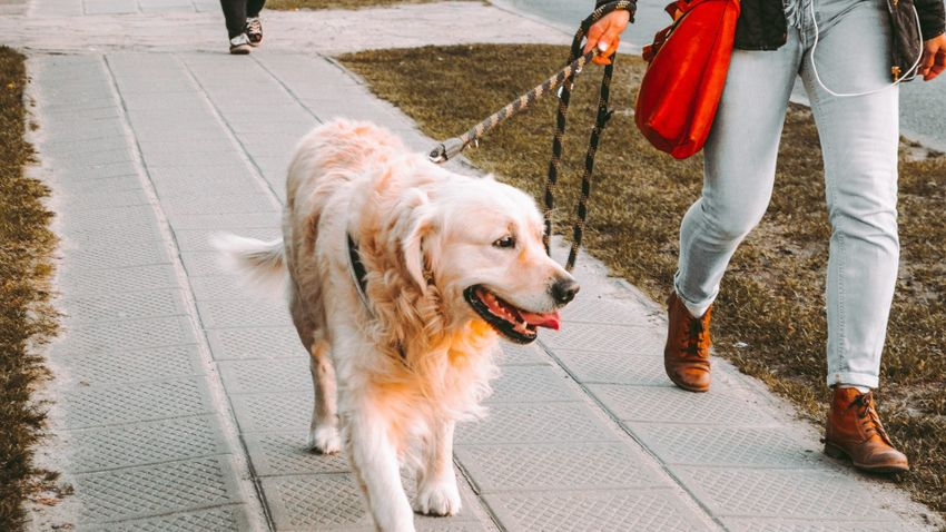 A kutyasétáltatás aranyszabályai: mire figyeljünk?