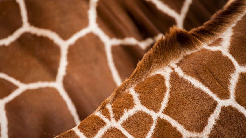 Állatok a lakberendezésben: minták és kiegészítők