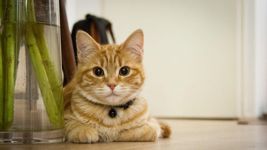 Mitől lesz igazán boldog a cicánk a lakásban?