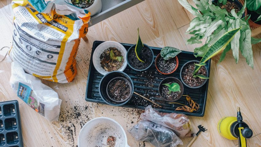 Erre használhatjuk kertünkben az ecetet