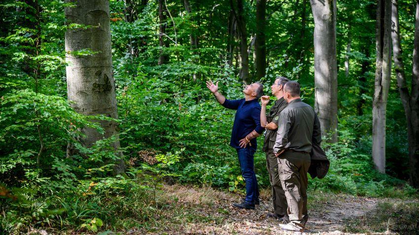 Az emberek egészségét szolgálják a magyar erdők
