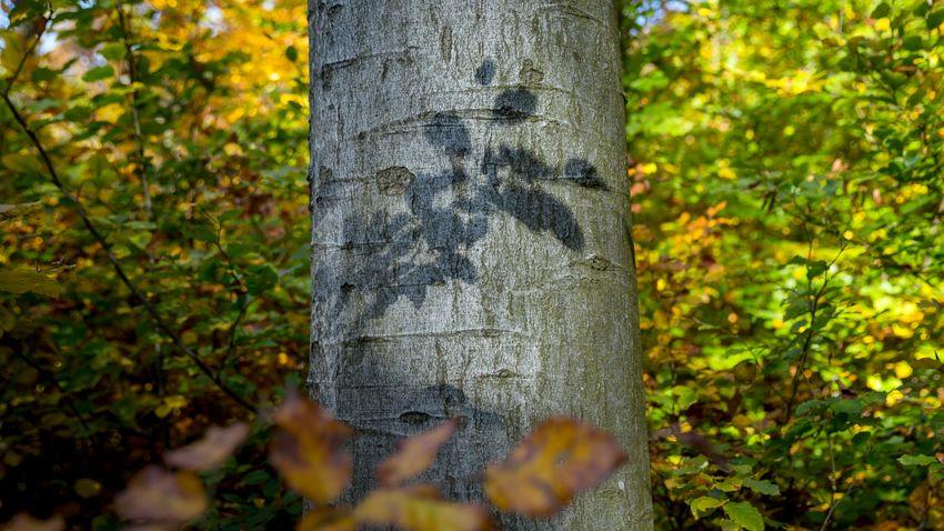 Akár az őszi levélhullatás is eltolódhat a felmelegedés következtében