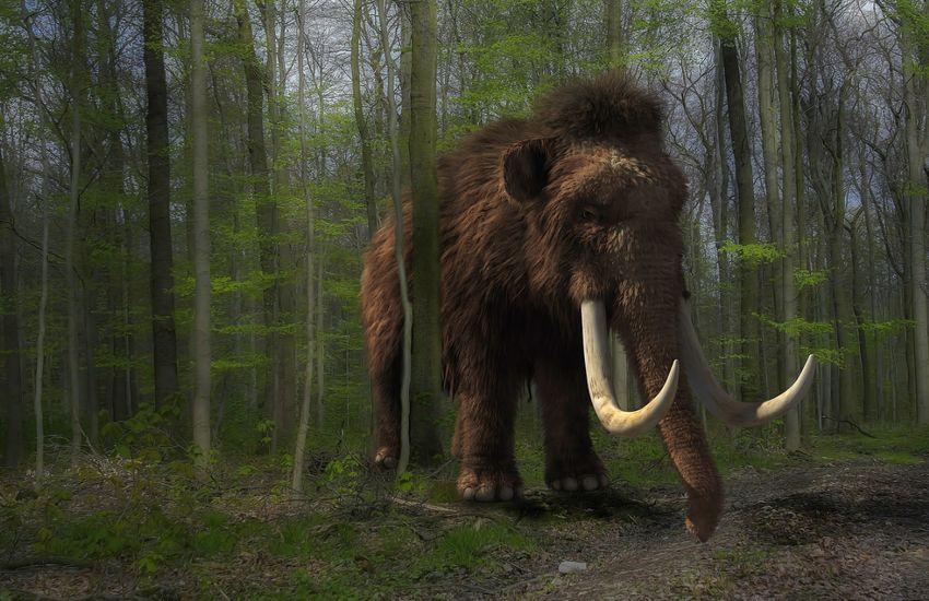 Pár éven belül életre kelhet a gyapjas mamut