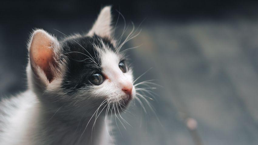 Minden, amit a macskák bajszáról tudni érdemes