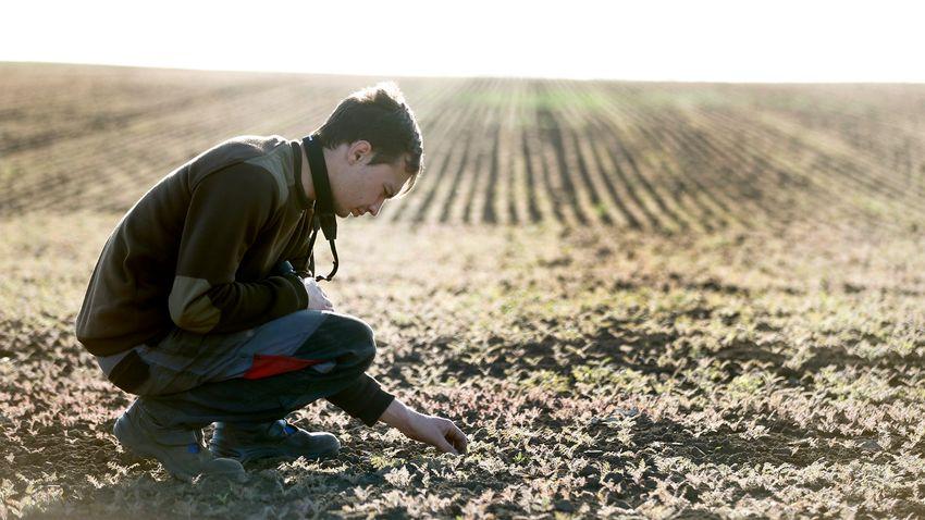 Egyszerűbb eljárás orvosolná az agrárium egyre égetőbb problémáját