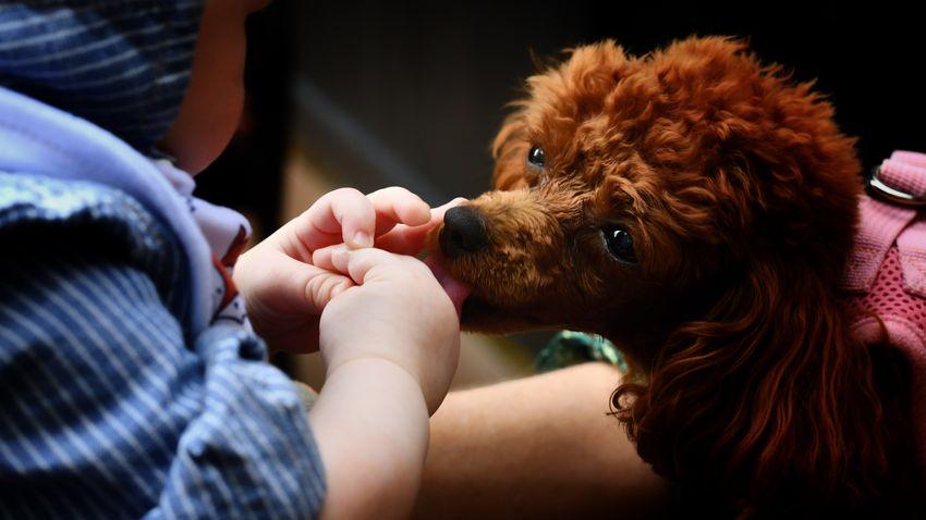Erre vágyik a kutya, ha a kezünket vagy az arcunkat nyalogatja