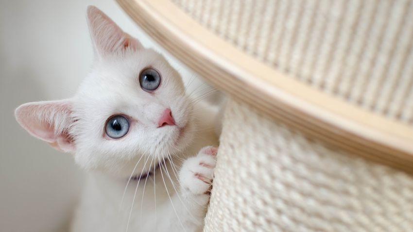Hogyan szoktassuk le a macskát a bútorok karmolásáról?