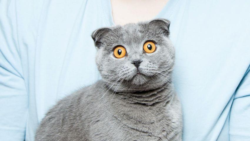 Miért fél ennyire a macska az uborkától? – A szakértő válaszol