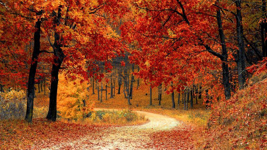 Ezért láthatunk sárga és vörös leveleket ősszel