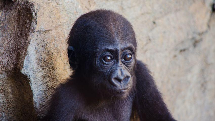 Az állatok javára adományozhatjuk a mobiltelefonunkat
