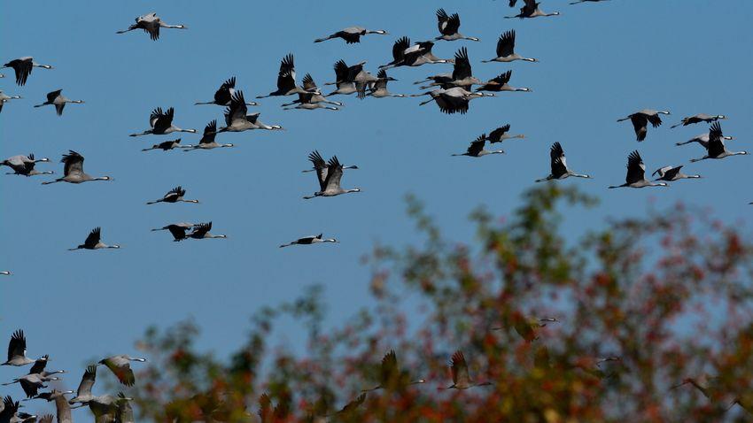 Kakukktojásra is lehet voksolni az év madara választáson