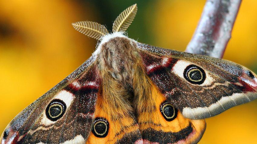 Darwin is beszámolt erről a különleges rovarról a 19. században
